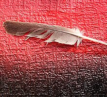 Feather Red by Peter Baglia
