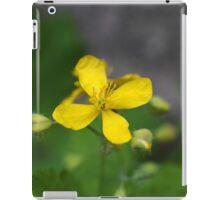 greater celandine or tetterwort iPad Case/Skin