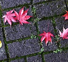 Acer Paving, Grasmere. by Mark Haynes Photography