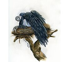 Nest Watercolor Painting Photographic Print
