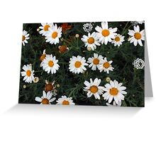 Garden Filled With Daisies Greeting Card