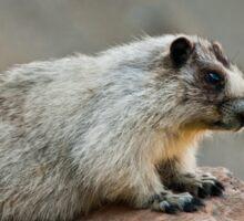 Hoary Marmot on a Boulder Sticker