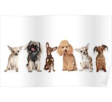 My Furry Friends Poster