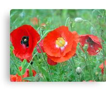 Red Poppies In The Rain Metal Print
