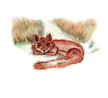 Fox in Nature Photographic Print
