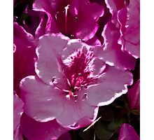 Home Flower Photographic Print