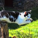 Cat Out on a Limb by virginian