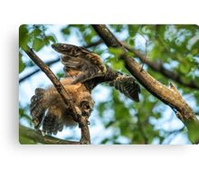 The Big Stretch_Great Horned Owlet Canvas Print