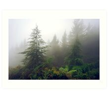 Richmond Pines - New Zealand Art Print