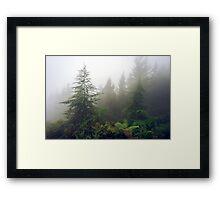 Richmond Pines - New Zealand Framed Print