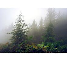 Richmond Pines - New Zealand Photographic Print