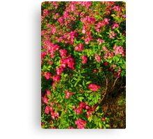 Wildrose Collective Canvas Print