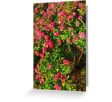 Wildrose Collective Greeting Card