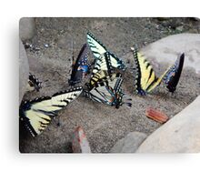 Butterfly Congregation Canvas Print