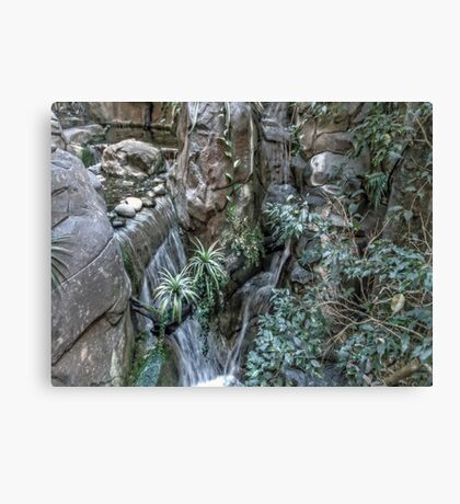 Forest Fall Canvas Print
