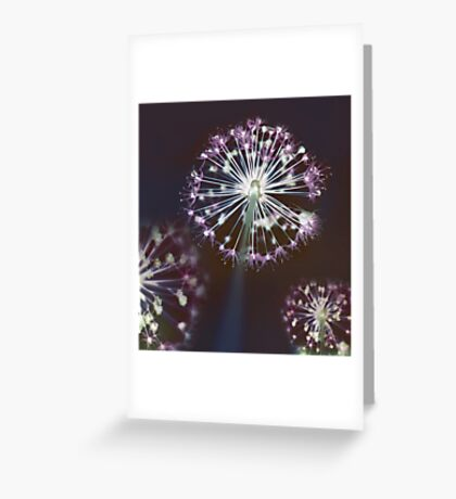 Floral Fireworks Greeting Card