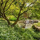 Wild Garlic & Maple by vivsworld
