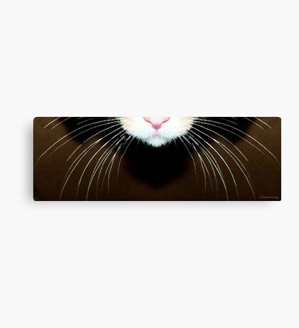 Cat Art - Super Whiskers Canvas Print