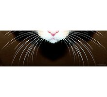 Cat Art - Super Whiskers Photographic Print
