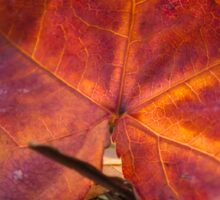 Autumn colour Sticker