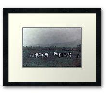 Longview Cows Framed Print