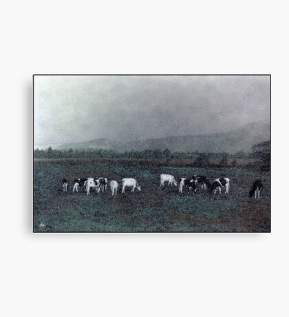 Longview Cows Canvas Print