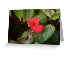 Flowers of Pushkar  Greeting Card