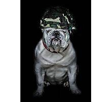 Private Bulldog 2 Photographic Print