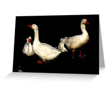 The little Feather.......... Greeting Card