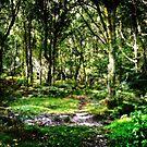 Forest of Bere Hampshire UK by hampshirelady