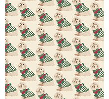 Christmas Peppy Photographic Print