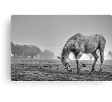 Appaloosa in the fog (1) Canvas Print