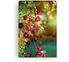 Roses in Springtime Cascade Canvas Print