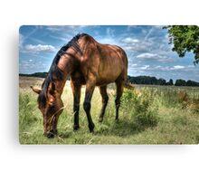 Horse in Field (Colour version) Canvas Print