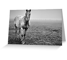 Appaloosa in the fog (2) Greeting Card