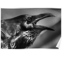 Raven in black and white Poster