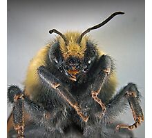 Macro Bumble Photographic Print