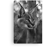 Caracal (black and white version) Canvas Print