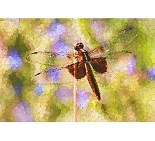 Bubbles The Dragonfly Photographic Print