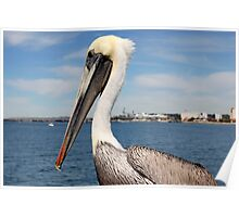 San Diego Pelican Poster