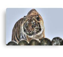 Sumatran Tiger (colour version) Canvas Print
