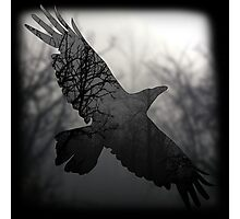 Into The Misty Forest Where A Crow Lives Photographic Print