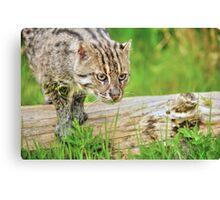 Fishing Cat (1) Canvas Print