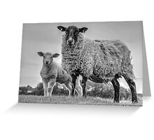 Ewe and Lamb in black and white Greeting Card