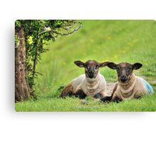 Sibling Lambs Canvas Print