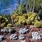 Cactus Collection - The Huntington Garden 1 by David Galson
