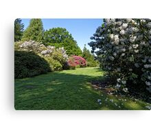 Rhododendron's  Canvas Print