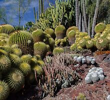 Cactus Garden 3 by David Galson