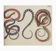 Naturgeschichte in Bildern mit erläuterndem Text E Strack 1820 Lief 3 Reptiles 029 Baby Tee
