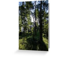 Morning Sun in the Woods Greeting Card